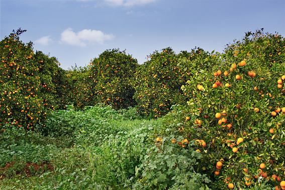 apelsin_festival_norra_cypern_magasinet_north_cyprus_fastigheter