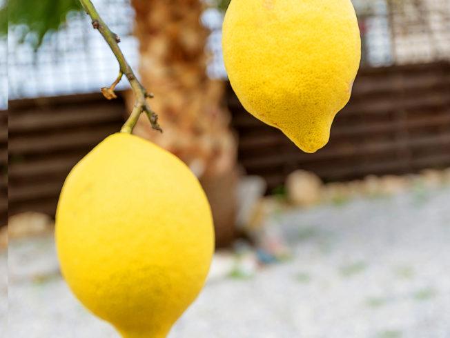 citron_norra_cypern_magasinet_citrus