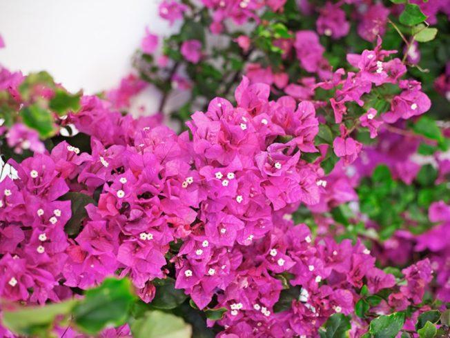 Dagens_bild_blomma_norra_cypern_magasinet