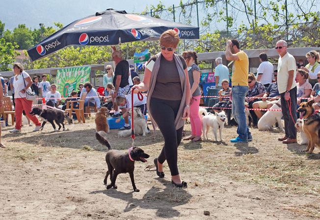 KAR Dog Show & Spring Fayre