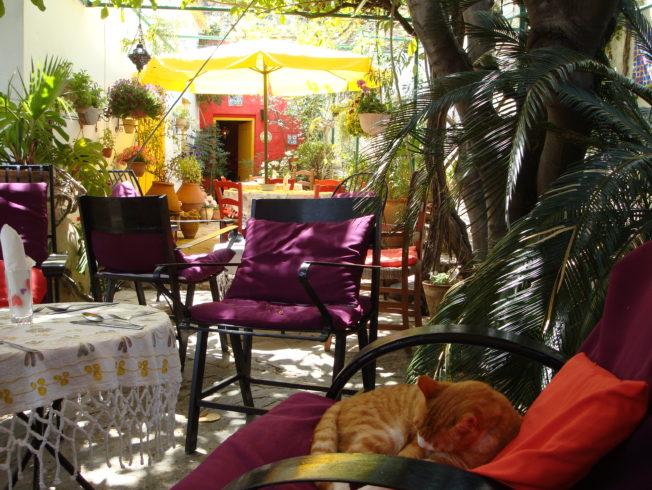 didree_tradgard_garden_norra_cypern