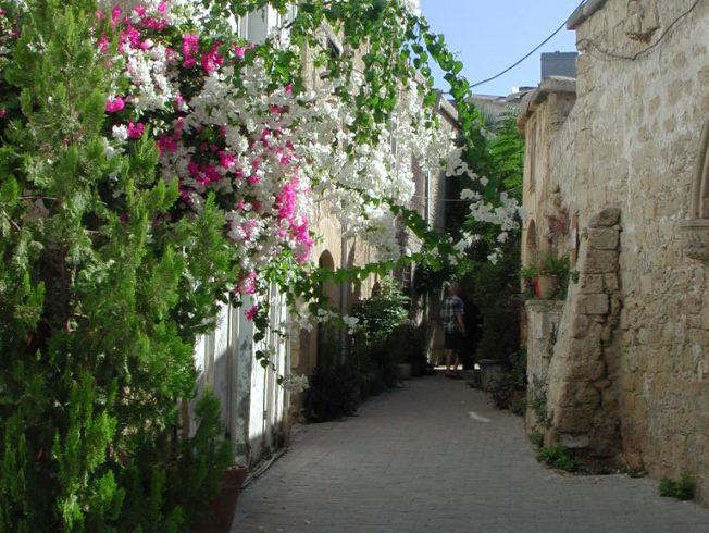 girne_gata_blommor_norra_cypern