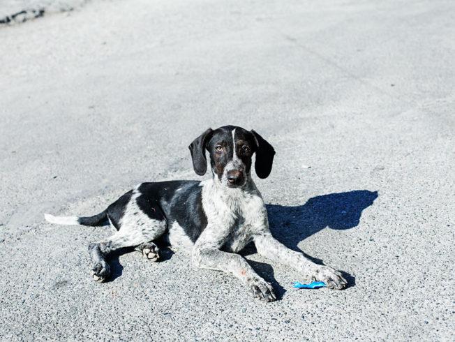 Norra_Cypern_North_cyprus_dog_hund_asfalt