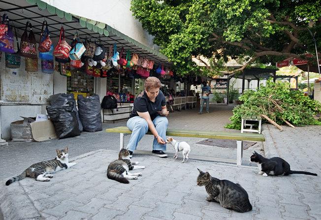 cats-lady-street-north-cyprus