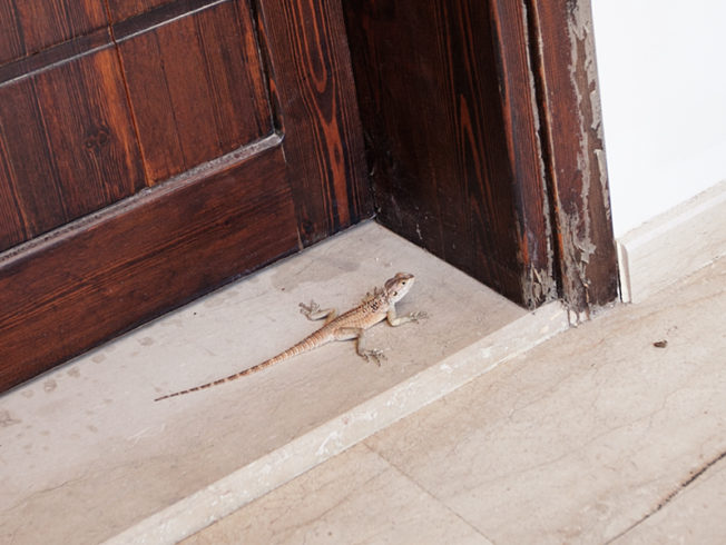 Lizzard sits outside door in North Cyprus