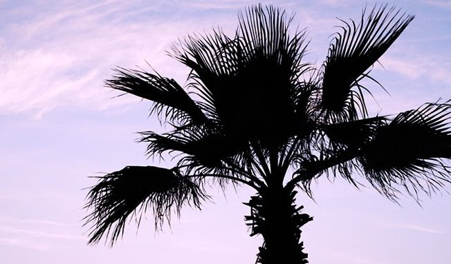 picture_day_palm_tree_sunset_ocean_strand_norra_cypern_north_cyprus_