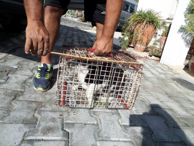 north-cyprus-pussy-in-a-cage