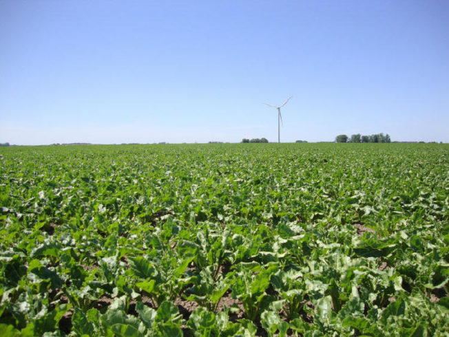north-cyprus-alternative-crops