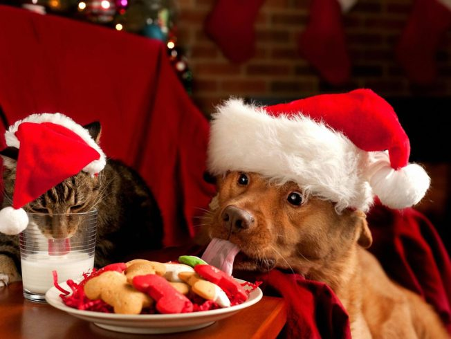 christmas-cat-and-dog-north-cyprus