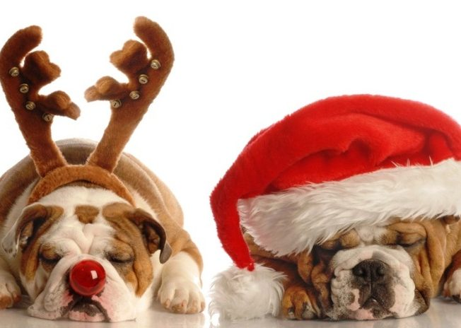 christmas-dogs-hats-north-cyprus