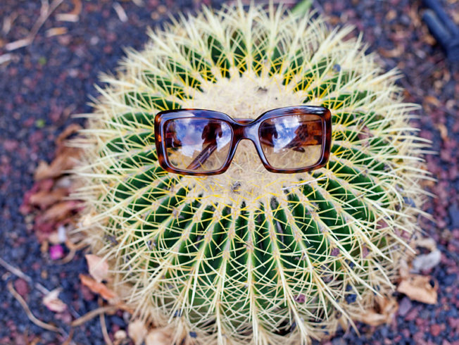 north-cyprus-cactus-wearing-sunglasses