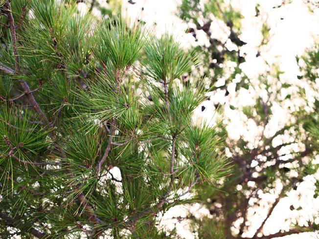 north-cyprus-tree