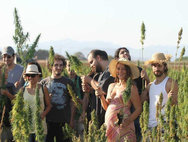 feature-hemp-main-picture-Hemp-pickers-in-Akaki-harvesting-the-crop-Medical-Cannabis-Facebook-page