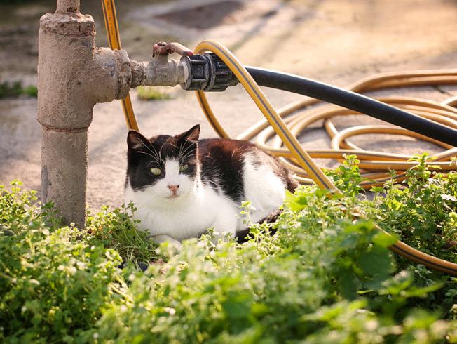 north-cypern-cats