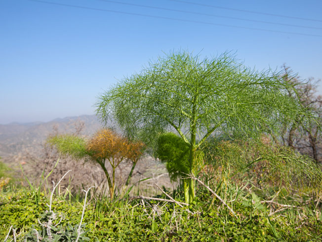 north-cyprus-2015-trees-green-bushes