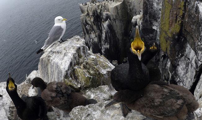 north-cyprus-negerfinken-birds-name-changes