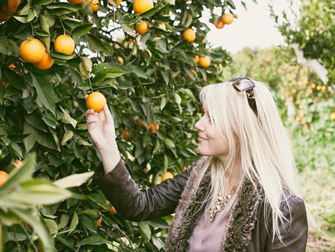 Orange groves in Güzelyurt