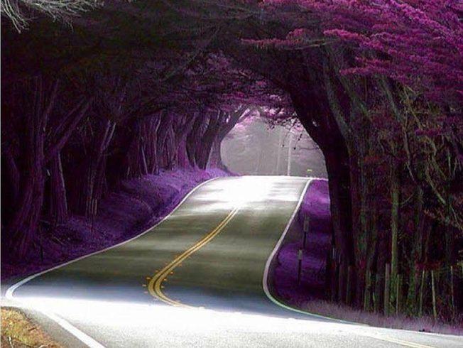 vacker-trad-tunnel-norra-cypern-8