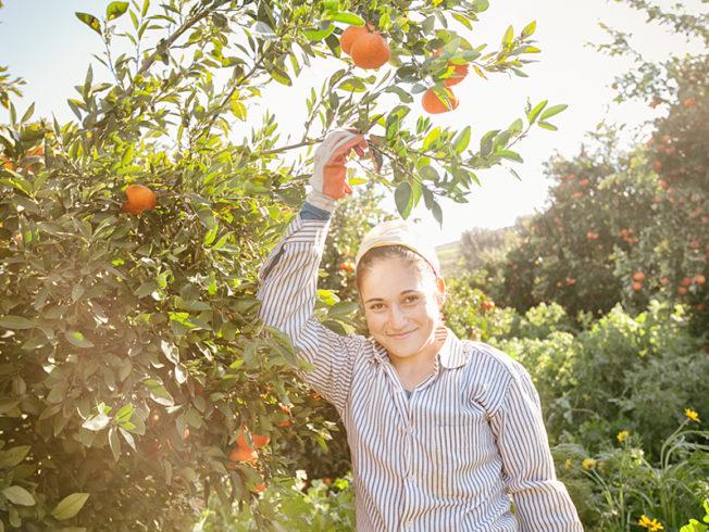 north-cyprus-orange-grove-guzelyurt