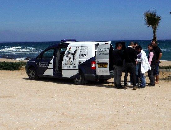 Near-East-University-Animal-Hospital-Ambulance-north-cyprus