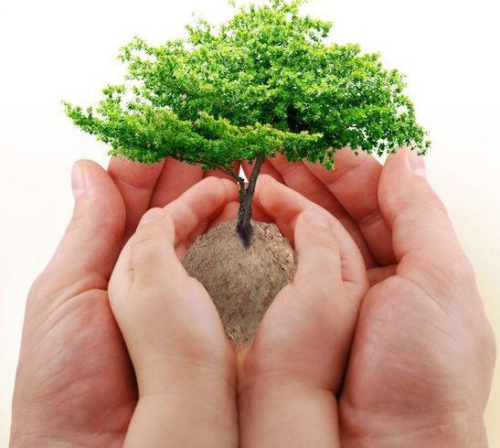 baby-tree-south-nicosia-cyprus