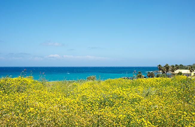 north-cyprus-2015-yellow-flowers-blue-skies