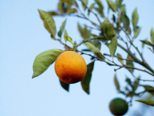 north-cyprus-2015-orange-tree-blue-sky