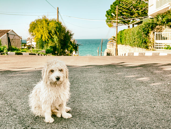 north-cyprus-dog-ocean-street