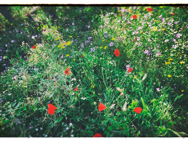 north-cyprus-flowers-greenery