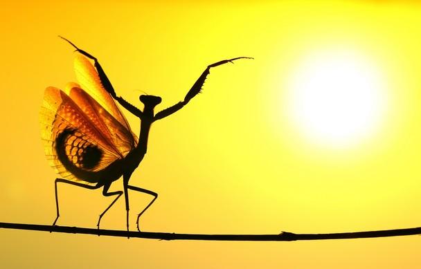Hasan-Baglar-praying-mantis