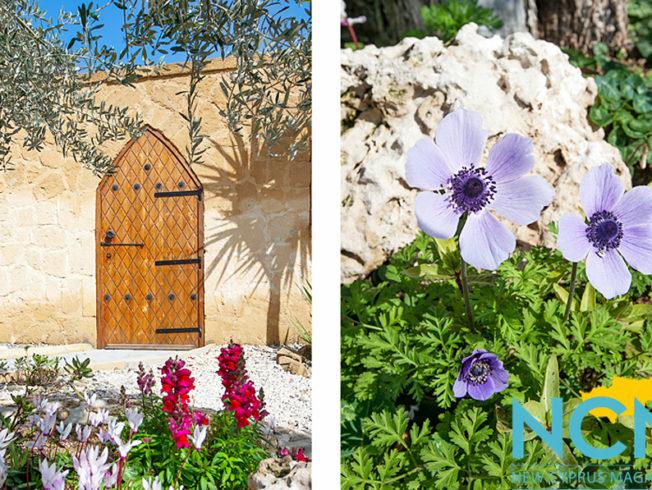 flower-door-picture-ncm-north-cyprus