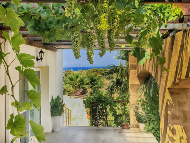 house-villa-catalkoy-grape-vines-view