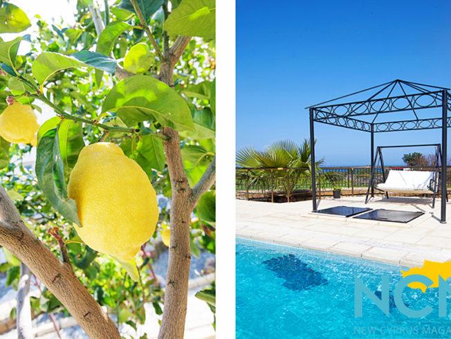 lemons-hammock-picture-ncm-north-cyprus