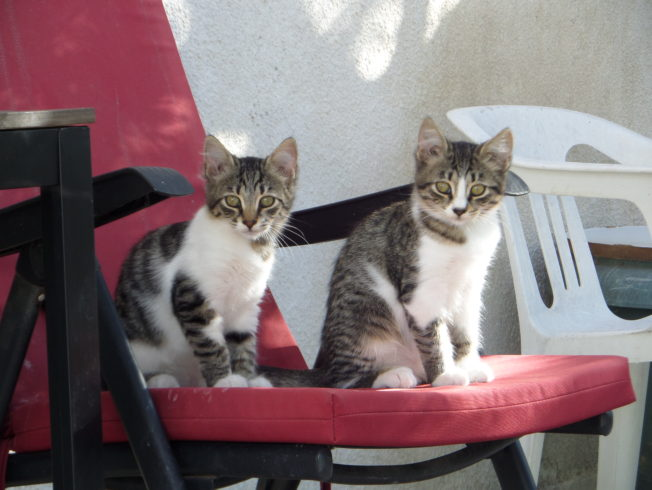 Kittens-red-chair-north-cyprus