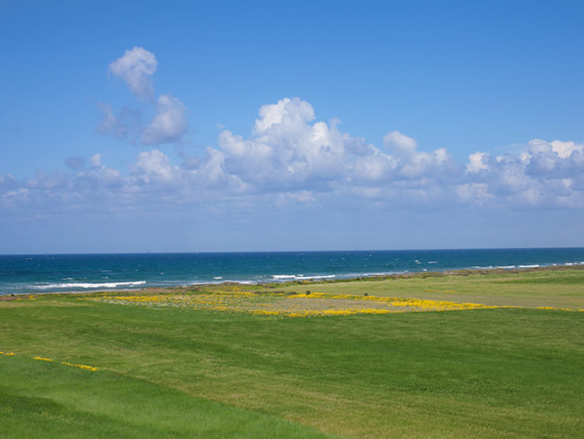north-cyprus-2015-green-field-sea