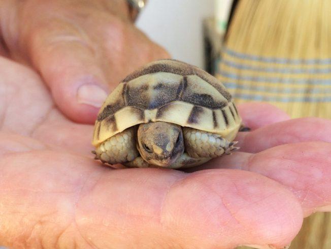 turtle-tortoise-hand