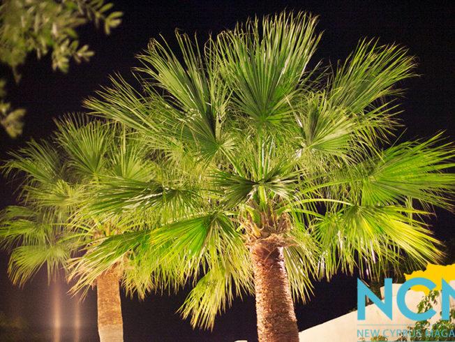 north-cyprus-2015-palm-tree-night