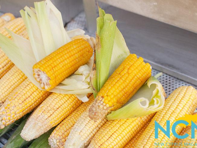 north-cyprus-corn-on-the-cob