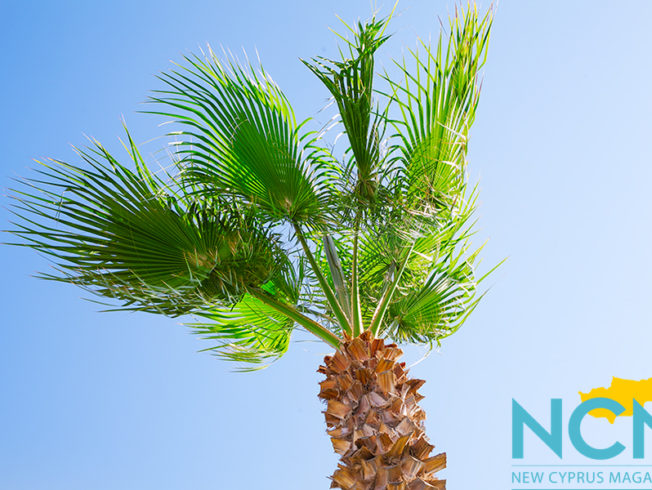 north-cyprus-paradise-palm-trees