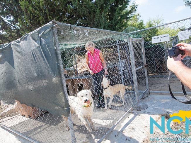 north-cyprus-2015-Kyrenia-Animal-Rescue
