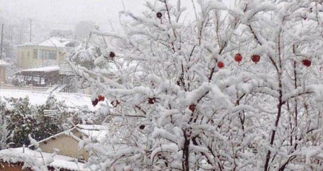 Cyprus-snow-white-cold