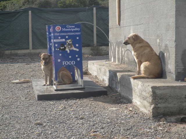 Girne's temporary dog shelter