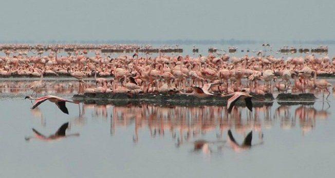 flamingos-larnaca-salt-lake