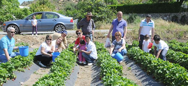 Strawberry festival in North Cyprus