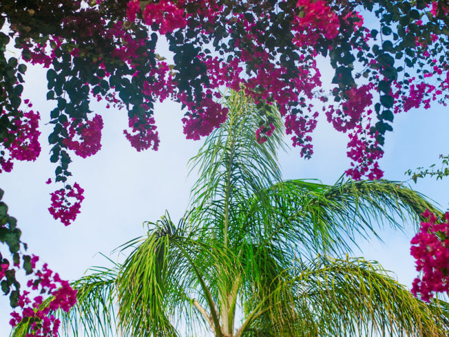 Palm trees and flowers