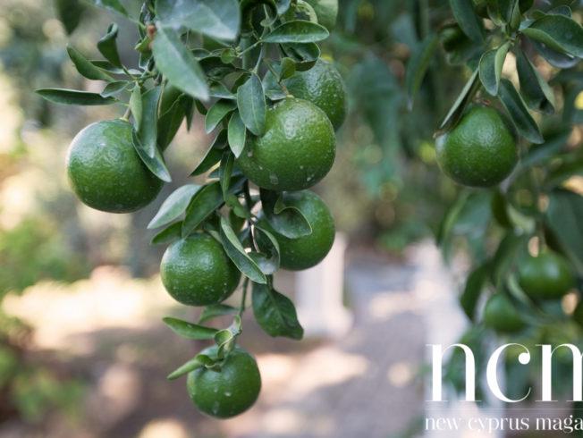 Green mandarins