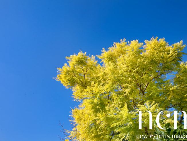 Blue sky and fall tree