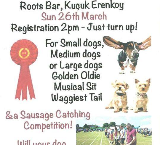 Fun Dog Show in North Cyprus